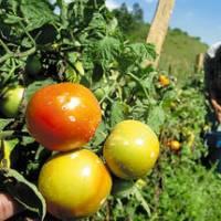 Sector agrícola venezolano