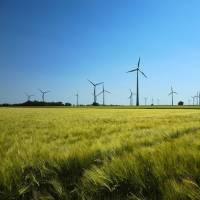 Parque eólico en entorno rural